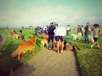 Good Dog Goods Martha's Vineyard Dog Parade Oak Bluffs Ocean Park 2015